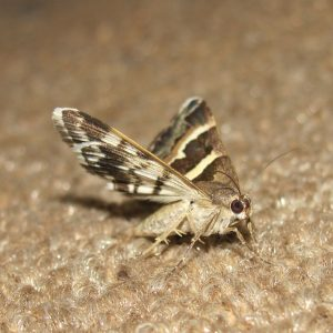 ry ice corp pest control moths